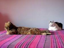 Curatenia in casa cand ai animale de companie