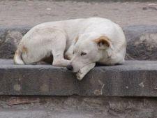 Adapostul pentru caini din Dealul Gusteritei, deschis pentru cei care vor sa adopte un animal