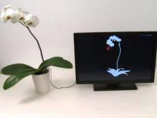 Orice planta poate deveni controller multitouch sau instrument muzical