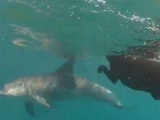 Un labrador este prieten la catarama cu delfinii (VIDEO)