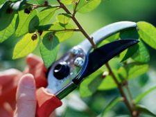 5 ponturi pentru curatarea copacilor