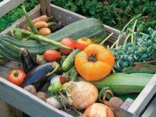Cum sa iti asiguri o recolta de legume de toamna
