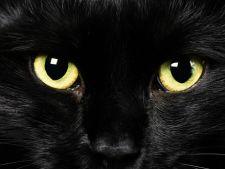 5 mituri despre pisici