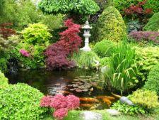 Plante pentru o gradina japoneza