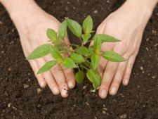 Reguli de aur pentru a avea plante sanatoase