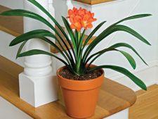 5 plante ideale pentru cultivarea in apartament