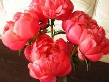 Plante Feng Shui pe care trebuie sa le ai in casa