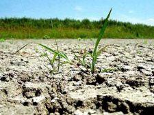 Statul ii despagubeste pe fermierii afectati de seceta