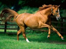 Suplimente alimentare necesare pentru cai