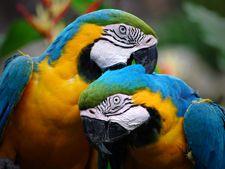 Cusca si accesoriile pentru papagal
