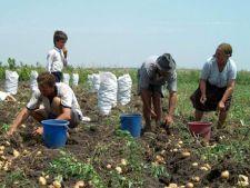 Studiu: Romanii au cea mai mare in incredere in agricultori