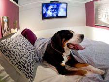 In New York, s-a deschis un hotel de sapte stele pentru caini