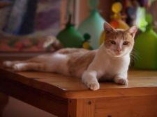 4 comportamente enervante ale animalului de companie si solutiile lor