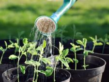 Identifica si salveaza plantele udate in exces