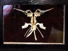 ADVERTORIAL Tablouri din os de peste, opera artistului Cristian Bocanu