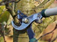Planuieste cu cap ingrijirea pomilor fructiferi din gradina