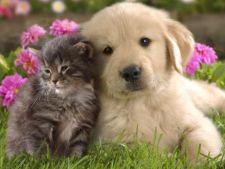 Asociatia GIA va dona 100.000 de portii de mancare pentru animalele din adaposturi
