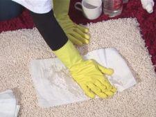 Cum sa scapi de mirosul neplacut de pisica din casa