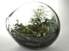 Cum sa-ti faci un terrarium