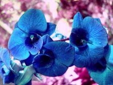 Plante exotice pentru interior - cele mai apreciate in 2012
