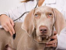Lista cabinete veterinare din Iasi