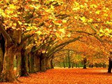 Cele mai frumoase parcuri ale lumii pentru o plimbare de toamna