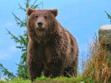 Un urs a intrat intr-o gospodarie din Moroieni, fara sa raneasca persoane