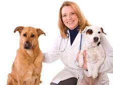 Clinici veterinare in Timisoara