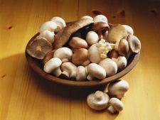 Tipuri de ciuperci pentru gatit