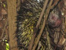 Uimitor! Au fost descoperite opt specii noi de mamifere intr-o rezervatie din Anzi