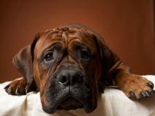 6 produse otravitoare pentru cainele tau