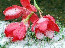 Plante parfumate si colorate pentru gradina de iarna