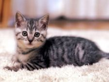 Constipatia la pisici: simptome, cauze, tratament