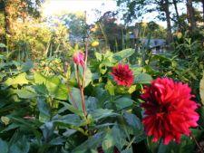 Lucrari pentru florile de toamna in octombrie