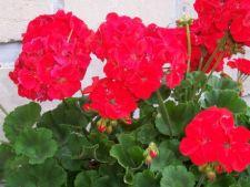 Muta plantele in casa pe perioada iernii