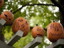 Decorarea gradinii cu dovleci de Halloween