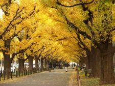 Copaci cu un colorit superb toamna