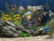 Parazitii la pestii de acvariu: simptome si tratament