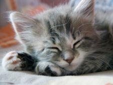 Pisica ta sufera de depresie? Cum sa o ajuti