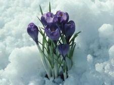 Cele mai frumoase plante care infloresc iarna