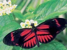 Recomandare de weekend: Lumea Insectelor la Muzeul Antipa
