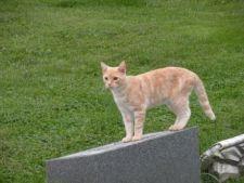 Uimitor! O pisica a descoperit un mormant vechi de peste 2.000 de ani