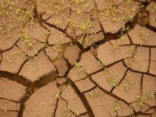 Drenarea solului, factor esential pentru cultivarea plantelor
