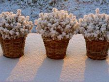 Cum protejezi plantele din ghiveci de ger
