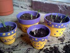 4 trucuri care previn uscarea pamantului pentru plantele de apartament