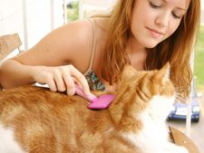 Matreata la pisici: cum o indepartezi
