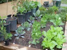 Ponturi pentru a planta o gradina de iarna