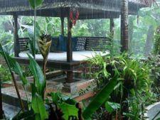 Tu stii sa iti protejezi plantele in caz de furtuna?