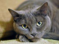 Diagnosticarea si tratamentul anemiei la pisici