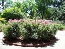 Planteaza tufele de flori in ghivece!